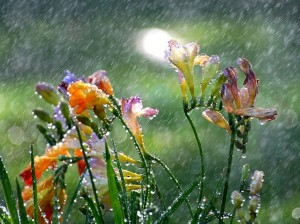 flowers-in-the-rain-for-blog